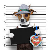 Bavarian beer mugshot dog Royalty Free Stock Image