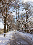 Bavarian country alley with snow. Winter Bavarian landscape, alley flanked by high trees with snow Royalty Free Stock Photography