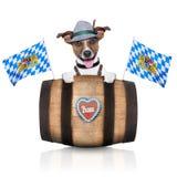 Bavarian dog Royalty Free Stock Image