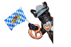 Bavarian dog Stock Images