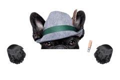 Bavarian dog stock images