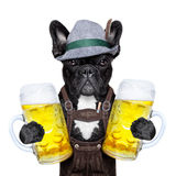 Bavarian dog Stock Image