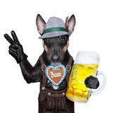 Bavarian dog Royalty Free Stock Image