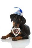 Bavarian dog Stock Image
