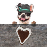 Bavarian dog Royalty Free Stock Photos