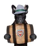 Bavarian dog Royalty Free Stock Images