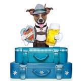 Bavarian dog Stock Photography