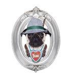 Bavarian dog Stock Photos