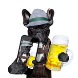 Bavarian dog Royalty Free Stock Photos