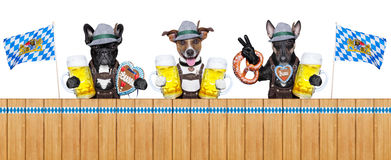 Bavarian dogs Stock Images