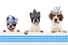 Bavarian dogs Royalty Free Stock Images