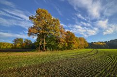 The Bavarian fields. Autumn afternoon in the middle of the Bavarian fields Royalty Free Stock Photo