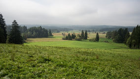 Bavarian fields and meadows stock images