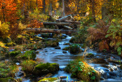 Bavarian forest Stock Images