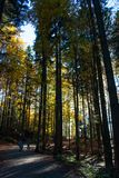 Bavarian Forest Royalty Free Stock Photo
