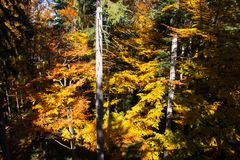 Bavarian Forest Stock Photography
