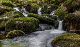 Bavarian Forest, Bavaria, Germany Royalty Free Stock Photography