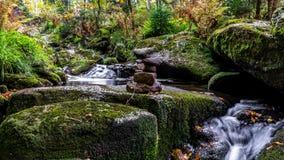 Bavarian Forest, Bavaria, Germany Royalty Free Stock Photo