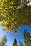Bavarian Forest. Fall Tree in the bavarian forest stock photos
