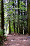 Bavarian forest Stock Photos