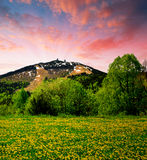 Bavarian Forest. Spring landscape in the Bavarian Forest National Park - Germany Royalty Free Stock Image