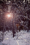 Bavarian forest in winter with snow, back light Royalty Free Stock Photo