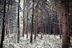 Bavarian forest and winter snow Royalty Free Stock Photos