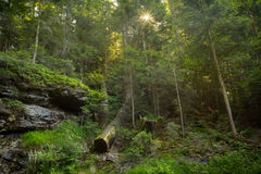 The Bavarian Forest Stock Images