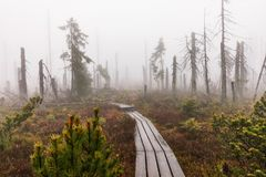 Bavarian Forest and the wooden pavements above the peat. Autumn forest in Bavarian forest national park, Germany. Royalty Free Stock Photography