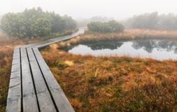 Bavarian Forest and the wooden pavements above the peat. Autumn forest in Bavarian forest national park, Germany. Royalty Free Stock Image