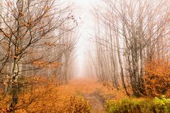 Bavarian Forest and the wooden pavements above the peat. Autumn forest in Bavarian forest national park, Germany. Stock Image