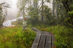 Bavarian Forest and the wooden pavements above the peat. Autumn forest in Bavarian forest national park, Germany. Royalty Free Stock Images
