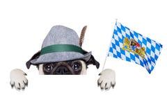 Bavarian german pug dog Royalty Free Stock Photos