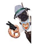Bavarian german pug dog Stock Image