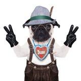 Bavarian german pug dog Stock Photo