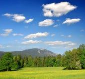 bavarian lasowy Germany park narodowy Fotografia Stock