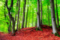 Bavarian Late Summer Forest Picture Royalty Free Stock Photos