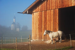 Bavarian morning. Horse and background: scenic church in the morning mist Stock Image