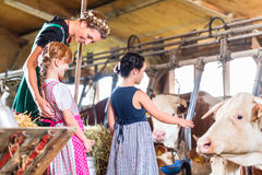 Bavarian mother showing children cows in cowhouse. Bavarian mother showing children cows on cow farm Royalty Free Stock Photo