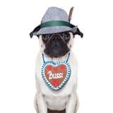 Bavarian pug dog Royalty Free Stock Photo