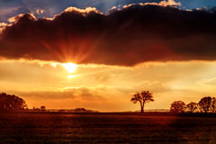 Bavarian Savannah. Landscape Silhouette Pictures of Savannah like Trees in the setting sun in European Bavaria Stock Photography