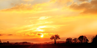 Bavarian Savannah. Landscape Silhouette Pictures of Savannah like Trees in the setting sun in European Bavaria Stock Images