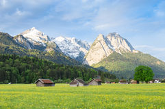 Bavarian serene landscape with snowy Alps mountains and spring flowering pasture in valley Royalty Free Stock Photos