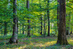 Bavarian Summer Forrest Stock Photo