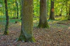 Bavarian Summer Forrest Royalty Free Stock Images