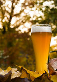 Bavarian weissbier between autumnal leaves Royalty Free Stock Photography