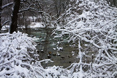 Bavarian winter landscape, green running waters framed by white Royalty Free Stock Image