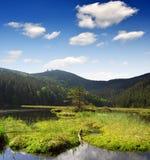 bavarianskoggermany nationalpark Arkivfoton
