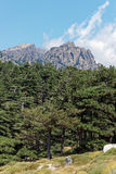 Bavella forests in Corsica mountains Royalty Free Stock Photography