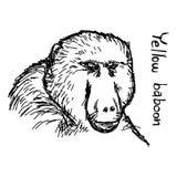 baviaan - de vectordiehand van de illustratieschets met zwarte wordt getrokken vector illustratie